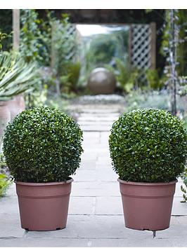 thompson-morgan-buxus-ball-diameter-35cm-2-x-30cm-pots