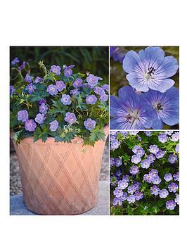 thompson-morgan-geranium-hardy-rozanne-3-jumbo-plugs