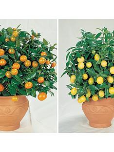 thompson-morgan-citrus-fruit-collection-2-plants-in-9cm-pots