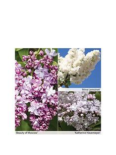 thompson-morgan-syringa-doubles-collection-3-x-9cm-potted-plants-free-gift-with-purchase