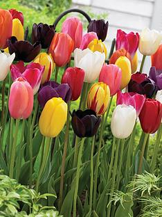 thompson-morgan-tulip-039everlasting039-mix-64-bulbs-size-1112