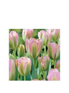 thompson-morgan-tulip-039greenland039-32-bulbs-size-1011-free-gift-with-purchase