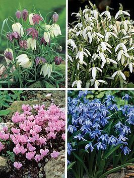 thompson-morgan-woodland-garden-collection-135-bulbs