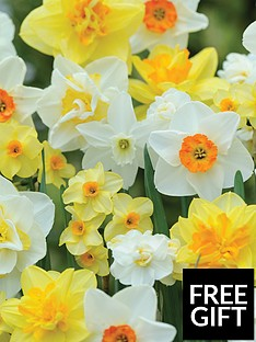 thompson-morgan-best-daffodil-mix-80-bulbs