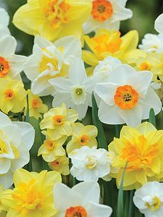 thompson-morgan-thompson-amp-morgan039s-best-daffodil-mix-80-bulbs-free-gift-with-purchase