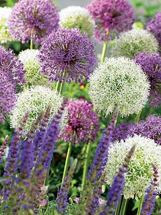thompson-morgan-allium-collection-200-bulbs-free-gift-with-purchase