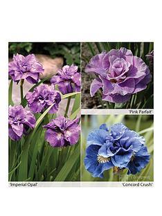 thompson-morgan-iris-siberica-collection-3x-bare-root-plants