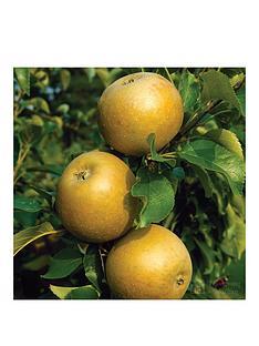 thompson-morgan-apple-egremont-russet-1-x-tree