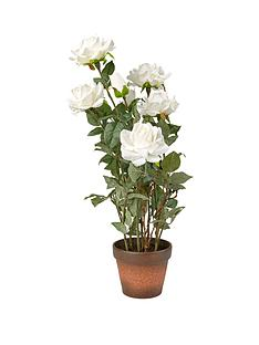 white-roses-in-a-terracotta-pot