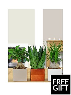 thompson-morgan-cube-pot-set-with-easy-care-plants-whi