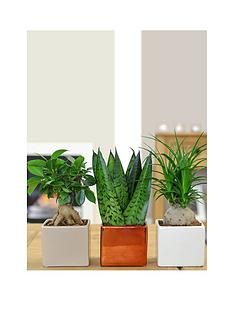 thompson-morgan-cube-pot-set-with-easy-care-plants-white-sand-and-copper-set-of-3