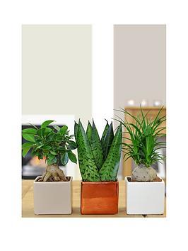 thompson-morgan-cube-pot-set-with-easy-care-plantsnbsp