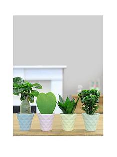 thompson-morgan-diamond-pots-with-easy-care-plants-pas