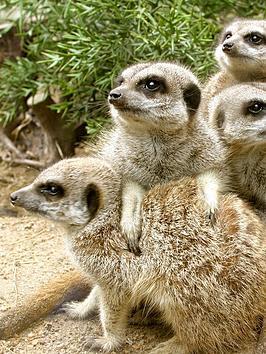 virgin-experience-days-animal-encounter-at-drusillas-park-in-alfriston-wast-sussex