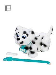 pet-parade-single-puppy-pack-dalmatian
