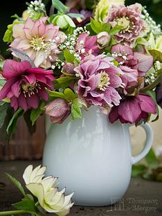 thompson-morgan-hellebore-washfield-doubles-double-queenhybridizers-mix-7cm-pots-x-4