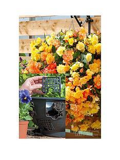 thompson-morgan-easy-fill-basket-x-2-begonia-f1-apricot-shades-improved-15-jumbo-plugs