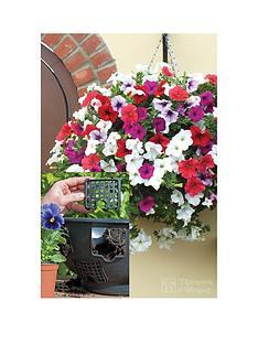 thompson-morgan-easy-fill-basket-x-2-petunia-surfinia-mixed-20-postiplugs