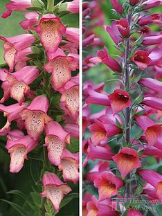 thompson-morgan-foxglove-illumination-collection-2-1-each-of-pink-and-ruby-slippers