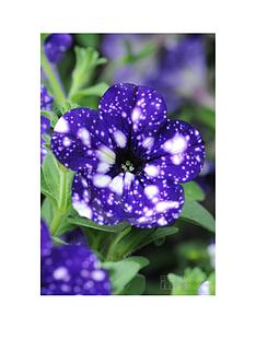 thompson-morgan-petunia-night-sky-10-postiplugs