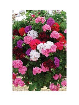 Photo of Thompson & morgan geranium trailing rosebud collection 10