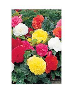 thompson-morgan-begonia-double-flower-mix-10-tubers-size-34