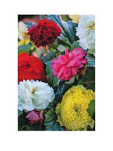 thompson-morgan-begonia-fringed-fimbriata-mix-10-tubers-size-34