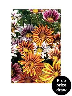 thompson-morgan-gazania-tiger-stripes-mixed-30-garden-re