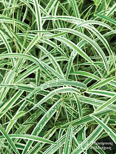 thompson-morgan-carex-morrowii-variegata-35-litre-pot-x-1--free-gift-with-purchase