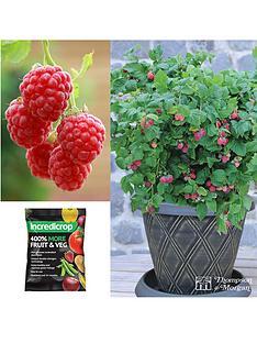 thompson-morgan-raspberry-ruby-beauty-starter-kit