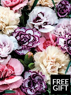 thompson-morgan-dianthus-frills-and-fragrance-mix
