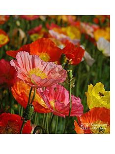 thompson-morgan-poppy-nudicaule-gartenzwerg-1-litre-pot-x-1