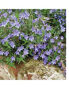 thompson-morgan-lithodora-diffusa-heavenly-blue-1-litre-pot-x-1-free-gift-with-purchase