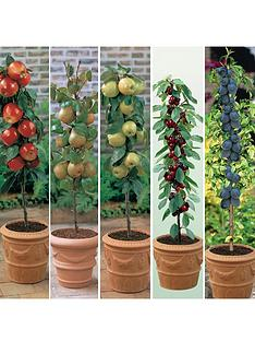 thompson-morgan-fruit-collection-5-plants--free-gift-with-purchase