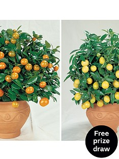 thompson-morgan-citrus-fruit-collection-2-plants-in-9cm-pots