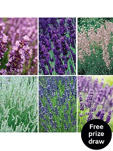 thompson-morgan-lavender-collection-12-postiplugs