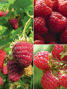 thompson-morgan-raspberry-full-season-collection-9-canes-3-each-of-glen-ample-glen-moy-joan-j--free-gift-with-purchase