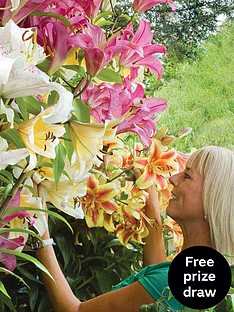 thompson-morgan-tree-lily-collection-18-bulbs-size-1820