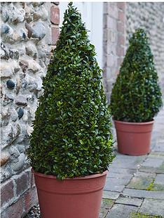 thompson-morgan-buxus-pyramid-55-60-cm-26-cm-pot-x-2-free-gift-with-purchase
