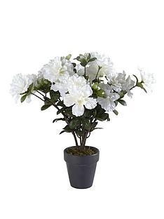 white-azalea-plant-in-slate-pot