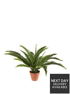 medium-boston-ferne-plant