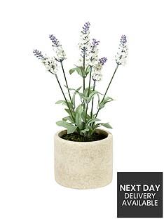white-lavender-in-stone-effect-pot