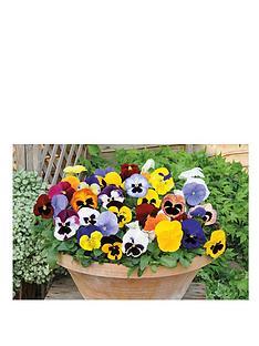 thompson-morgan-pansy-matrix-mixed-garden-ready-30-tray-x-1