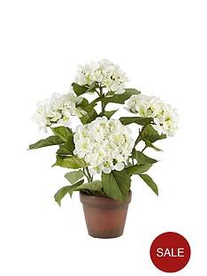 hydrangea-in-terracotta-pot