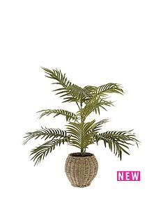 areca-palm-in-basket