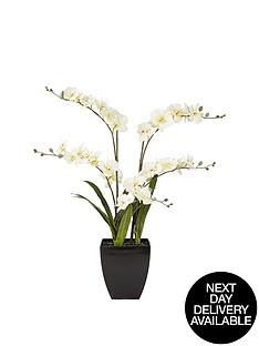 5-stem-orchid-in-pot