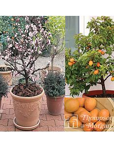 thompson-morgan-patio-range-apricot-aprigold-1-tree