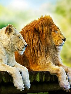 virgin-experience-days-big-cats-photography-experience-day