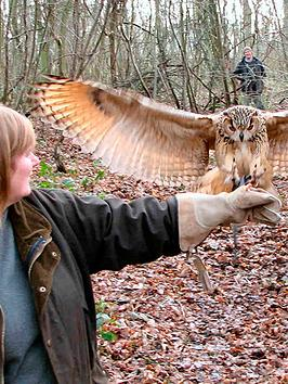 virgin-experience-days-introduction-to-owl-handling-for-two