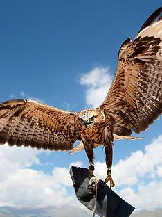virgin-experience-days-falconry-taster-for-two-in-a-choice-of-6-locations
